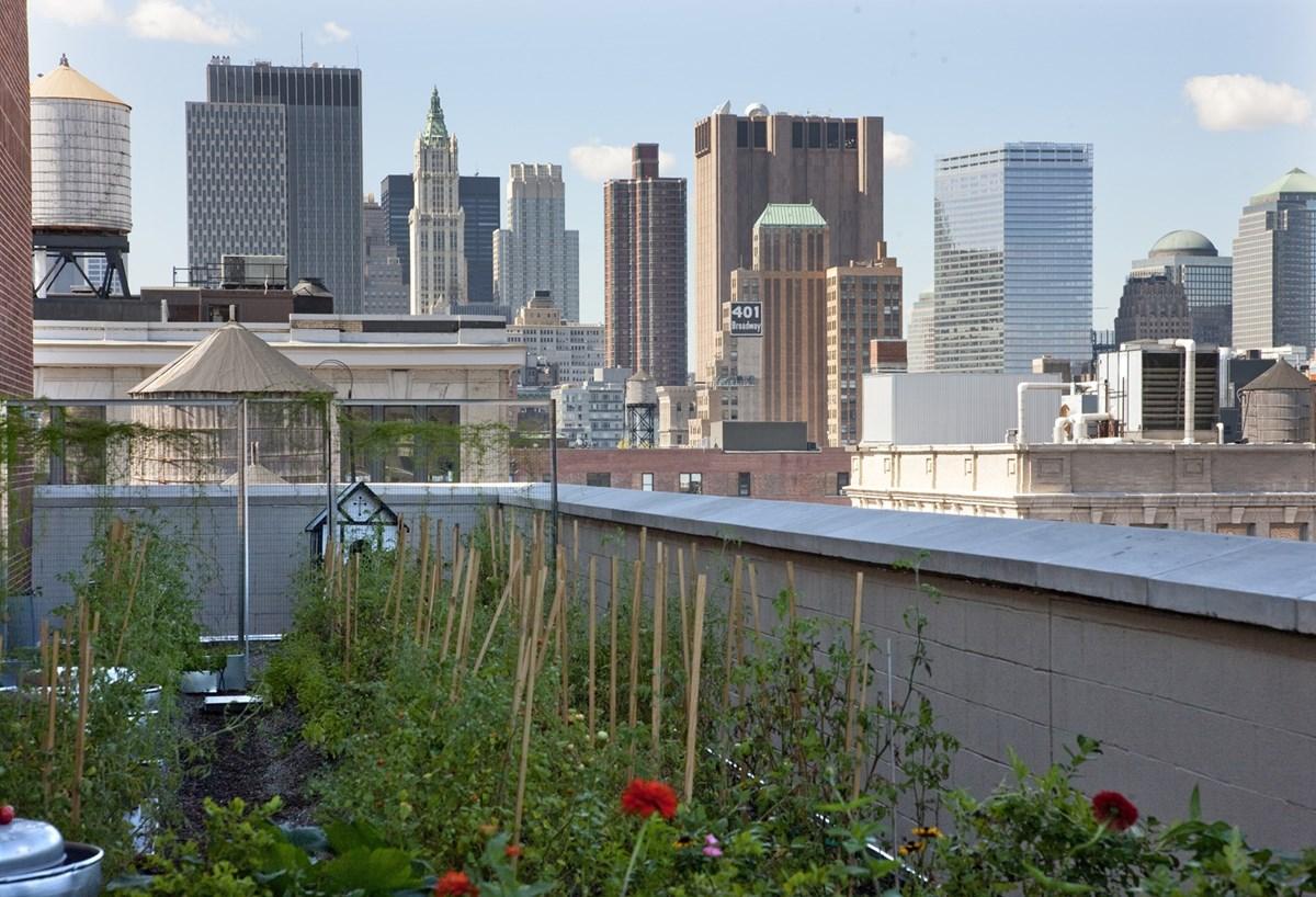 Rooftop Kitchen Garden Firmdale Hotels Rooftop Kitchen Garden